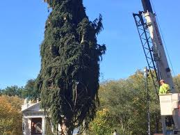 new tree being set up new ct patch