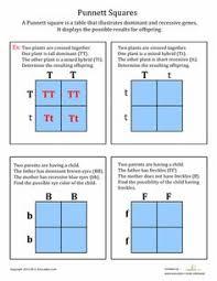genetics info and punnett square activity for kids aula