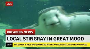 Meme News - dopl3r com memes live breaking news local stingray in great mood