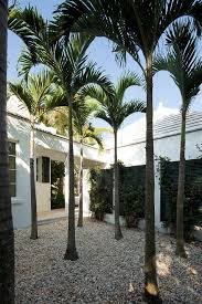 palm trees landscaping ideas landscape tropical with white stucco