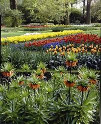 54 best bulb garden images on pinterest flowers spring flowers