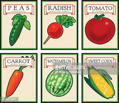 seed packets vintage seed packets vector getty images