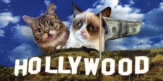 Lil Bub Meme - rise of the hollywood cats inside grumpy cat and lil bub s big deals