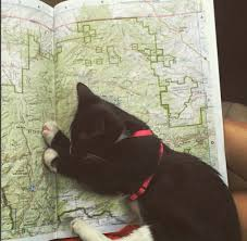 these cats prove the great outdoors isn u0027t just for dogs