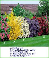 Top Flowering Shrubs - growing a thick hedgerow rather than building an esthetically