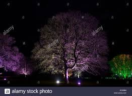enchanted colourful lit up trees at westonbirt