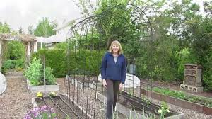 how to grow pole beans on an arbor or trellis youtube