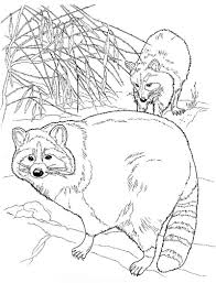 coloring pages beautiful raccoon coloring pages print raccoon