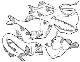 dangerous deep sea fish angler fish colouring dangerous deep