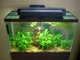 How To Aquascape A Planted Tank A No Fuss Planted Aquarium Details Articles Tfh Magazine