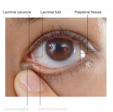 external eye anatomy diagram choice image learn human anatomy image