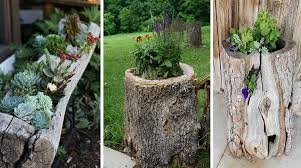 14 ideas para convertir un tronco en la perfecta maceta para tus