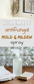 antifungal mold and mildew spray mycleaningsolutions