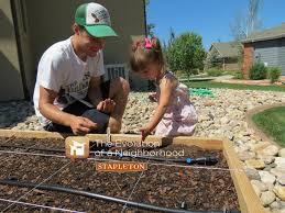 Urban Garden Denver - stapleton u0027s homegrown tomatoes stapleton denver