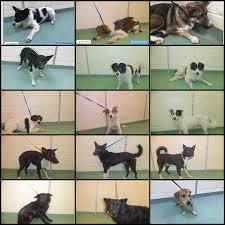 boxer dog rescue florida big fluffy dog rescue home facebook