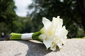 Image Of Calla Lily Flower - wedding flower ideas for outdoor weddings