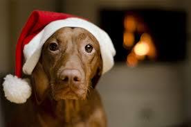 Pet M Fiber 5 Pet Safety Tips For Christmas
