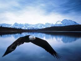 Eagles Flag Bald Eagle Flag Images