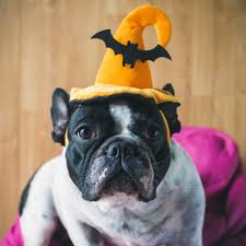 fake cobwebs halloween how to have a happy halloween with your dog non stop travel fun