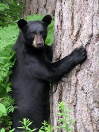 New Hampshire Wildlife images Nh wildlife photos wildlife photography nh photographs nh jpg