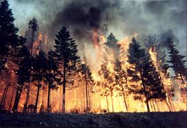 Wildfire Episode Guide Season 2 by Wildfire Alarm Climate Change And Health Upstream