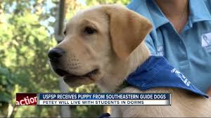 usf st petersburg puppy club students are training dogs for