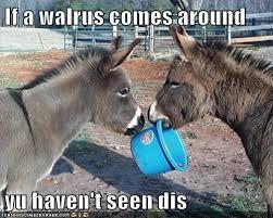 Funny Donkey Memes - animal capshunz donkeys funny animal pictures with captions