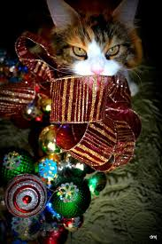 52 best christmas cats images on pinterest christmas cats cats