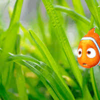 finding nemo gifs create discover share awesome