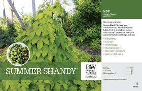 humulus summer shandy hops 11x7 variety benchcard proven winners