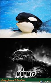 Whale Meme - killer whale memes best collection of funny killer whale pictures