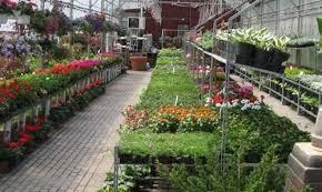 clover nursery home