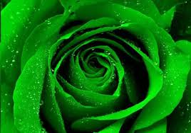 green roses how to make green roses a simple step by step guide hubpages