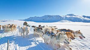 see greenland by dog sled a holiday close to nature post