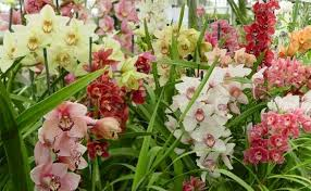 orchid plant stunning orchid plants the gift for s day