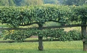 Fruit Tree Garden Layout Our New Kitchen Garden Plans