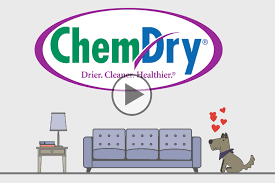 Sofa King Wee Todd Did by Chem Dry Carpet Cleaning World U0027s Leading Carpet Cleaner