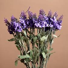 online get cheap dried lavender flowers aliexpress com alibaba