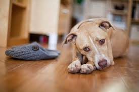 state with most dog owners 2016 breed restrictions 101 rent com blog