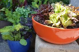 home decor spring into a container garden potted