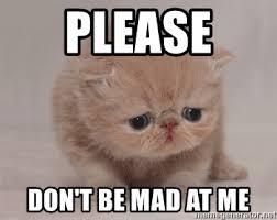 Mad Cat Memes - dont be mad cat memes mne vse pohuj