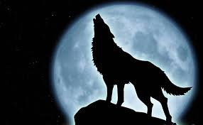 wolf meanings wolf howling wolf and best 25 wolf moon ideas on