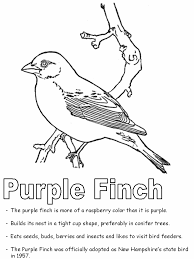united states symbols coloring pages purple finch coloring page