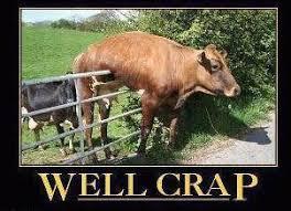 Hilarious Memes 2013 - hilarious memes funny posts lol humor 12 lds s m i l e