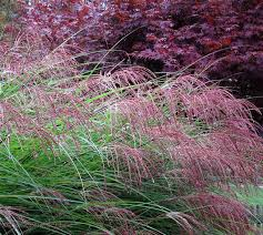 trees shrubs u0026 grasses fall color christianson u0027s nursery