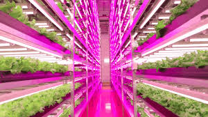 how led is lighting the way toward indoor farming ge reports