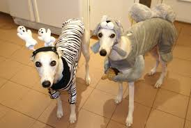 Squirrel Dog Halloween Costume Howlin U0027 Hammer Halloween Whippet Snippets