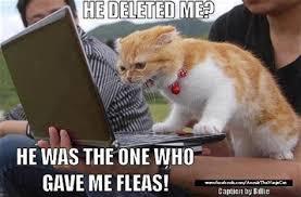 Lol Cat Meme - lolcats meme dump a day funny cat memes lol tridanim