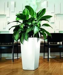 self watering indoor planters u2013 affordinsurrates com
