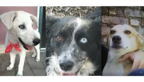 cani in cerca di casa rubrica quattro ze tre splendidi cani in cerca di casa